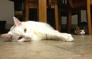 The Guska family's cats, Rosie and Ivy, enjoy the radiant heat under the kitchen tile as much as their humans do.