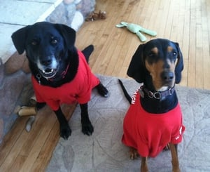 The canine members of WarmlyYours join the team in going red to raise awareness for heart disease and stroke.