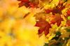 Fotolia 68808706 radiant fall colors 092414