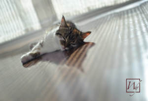 Cat on heated flooring