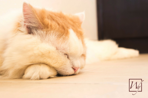 Cat sleeping on heated floors