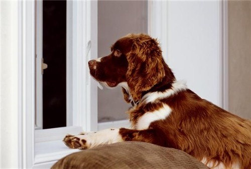 Designing and furnishing a dog-friendly home