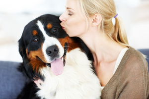 installing radiant heating in your dog's kennel
