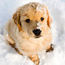 Blog121812 cute puppy for cute pet tuesday thumb
