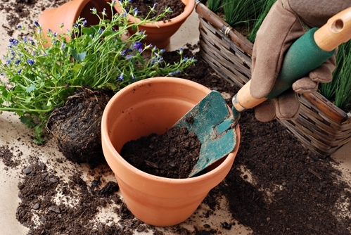 Planting flowers is an easy, inexpensive spring time project